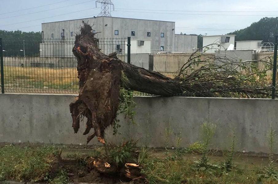 Un arbre caigut per una ventada en una imatge d'arxiu