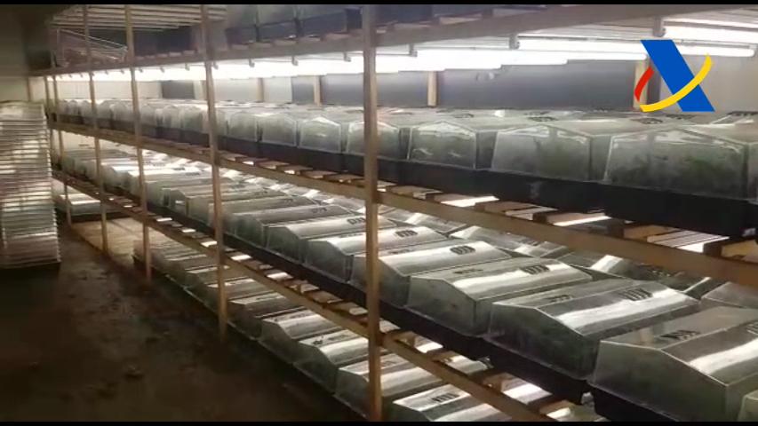 La marihuana estava emmagatzemada per a la seva comercialització // Agència Tributària