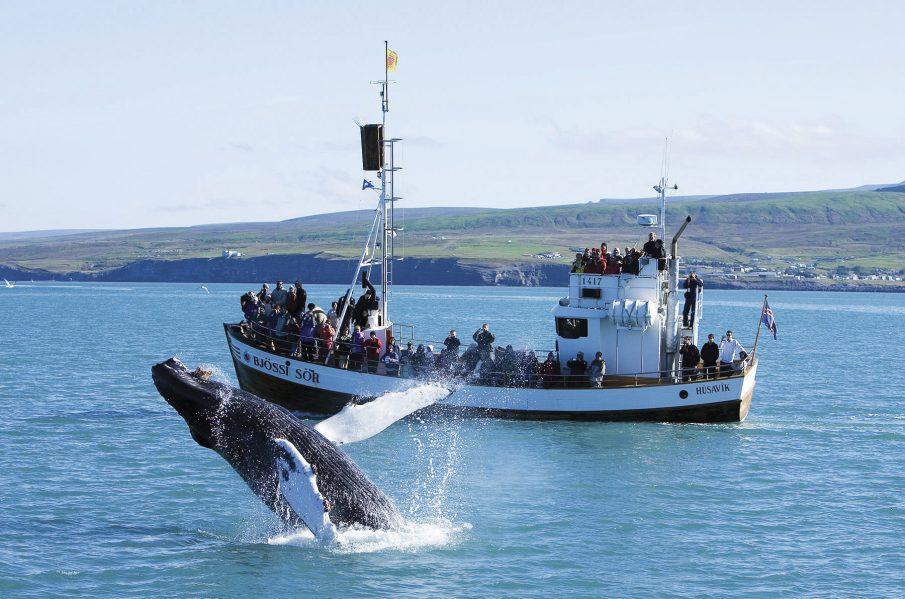 L'observació de balenes a Húsavík actualment és un dels atractius turístics d'Islàndia
