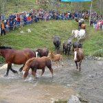 Cavalls arribant a les planes en una edició anterior