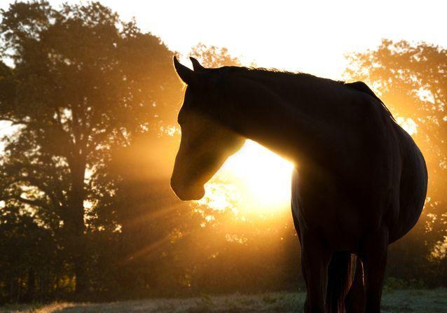 El cavall va ser atacat el passat diumenge 15 d'octubre