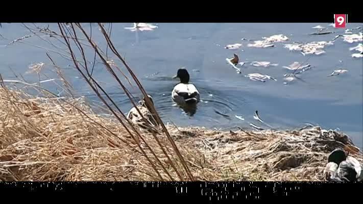 biodiversitat-i-medi-ambient108388-2018-04-12