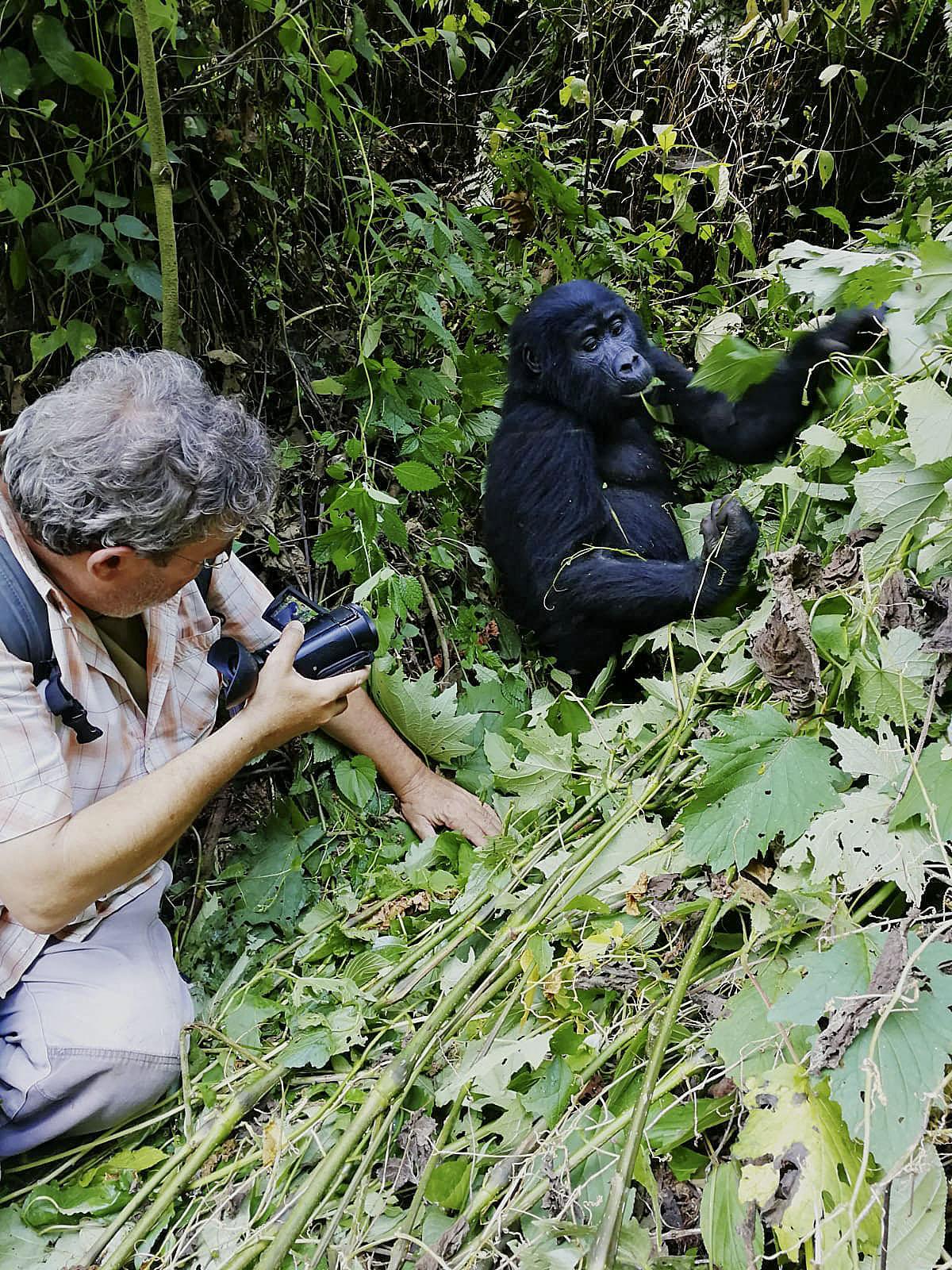 Jaume Sañé fotografiant un goril·la en una de les seves visites a la selva d'Uganda