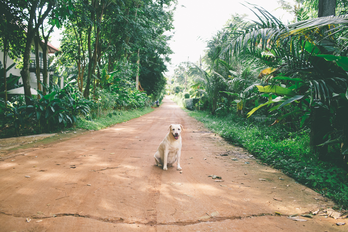 Dogs- Travel-Photography-2