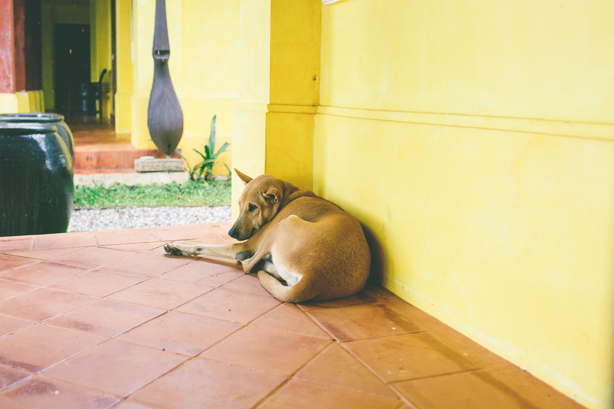 Dogs- Travel-Photography-4