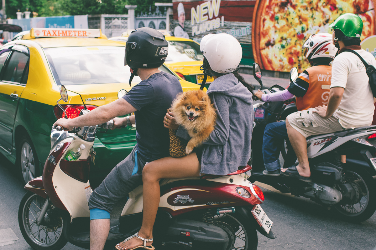 Dogs- Travel-Photography-5