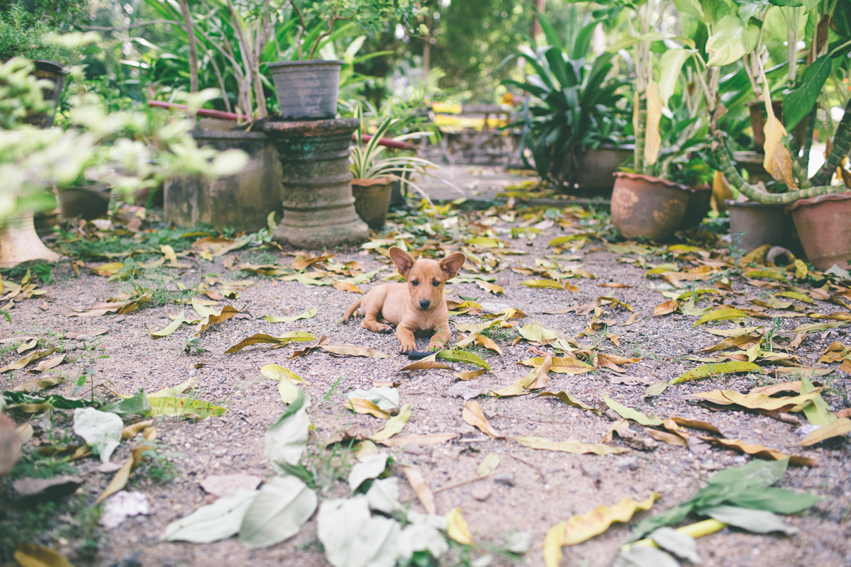 Dogs- Travel-Photography-8