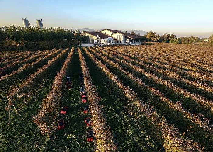 Italian vineyard. Pic: Shutterstock