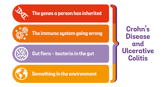 Four contributing causes to developing Crohn's and Colitis - genes, immune system going wrong, gut flora and environment