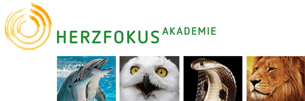 Header Herzfokus-Akademie