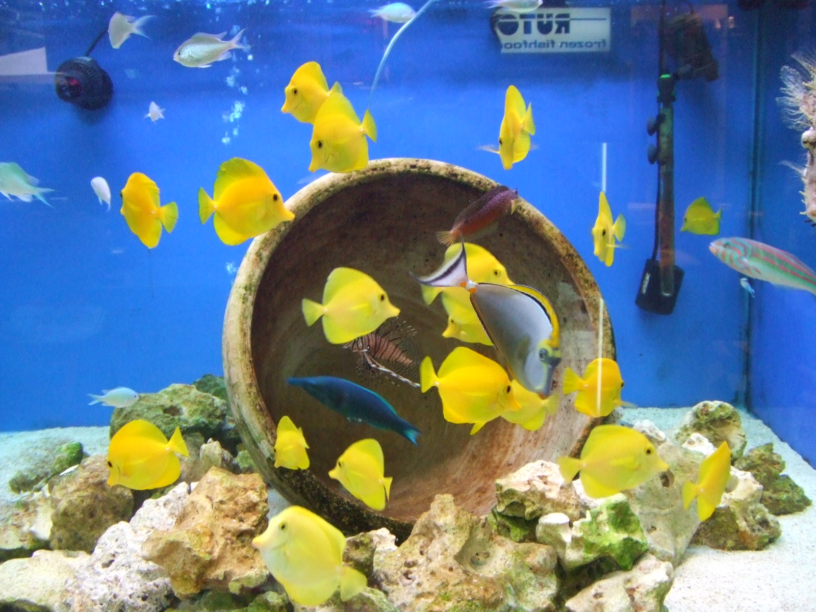 Creating a compatible community of marine fish for Community saltwater fish