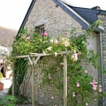 roses round the cottage