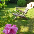 old armchair in the garden with a rose, under the appletree