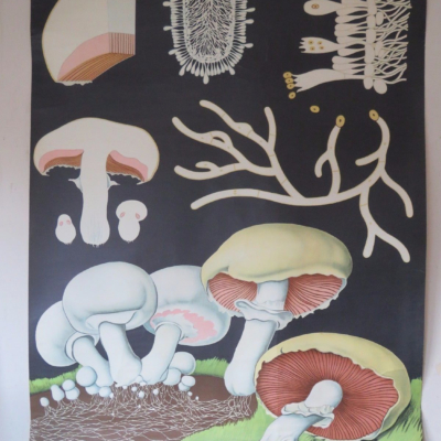 dr. jung, koch & quentell. 