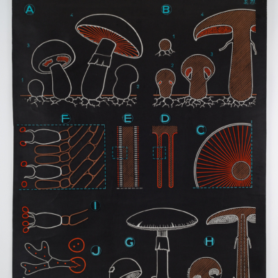 dr auzoux & p.sougy. chalk board style pull down chart of mushroom, published in 1966.