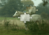 Magic Horse Jigsaw