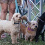 Doggy Trio