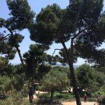 Gaudi's garden