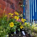 Granby Four Streets launch their Winter Garden