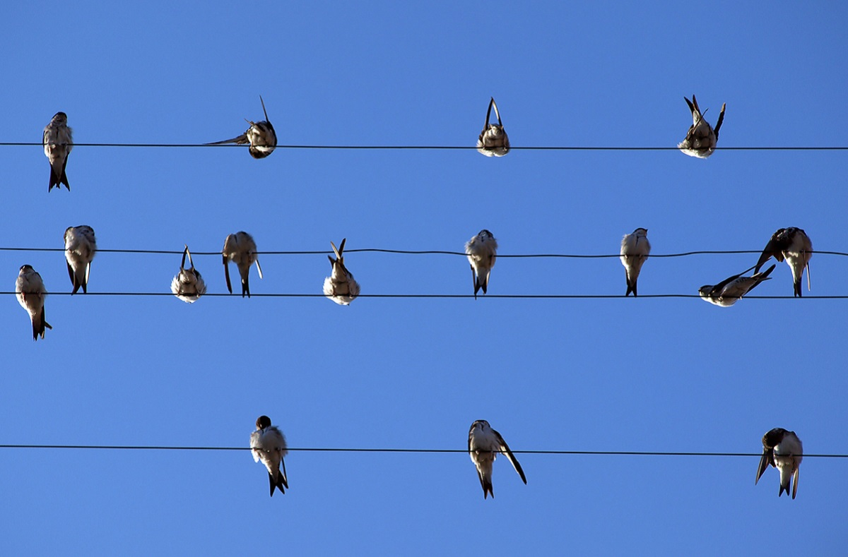 Looking back is for the birds – a twitcher's playlist