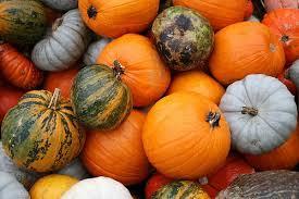 Varieties of pumpkin