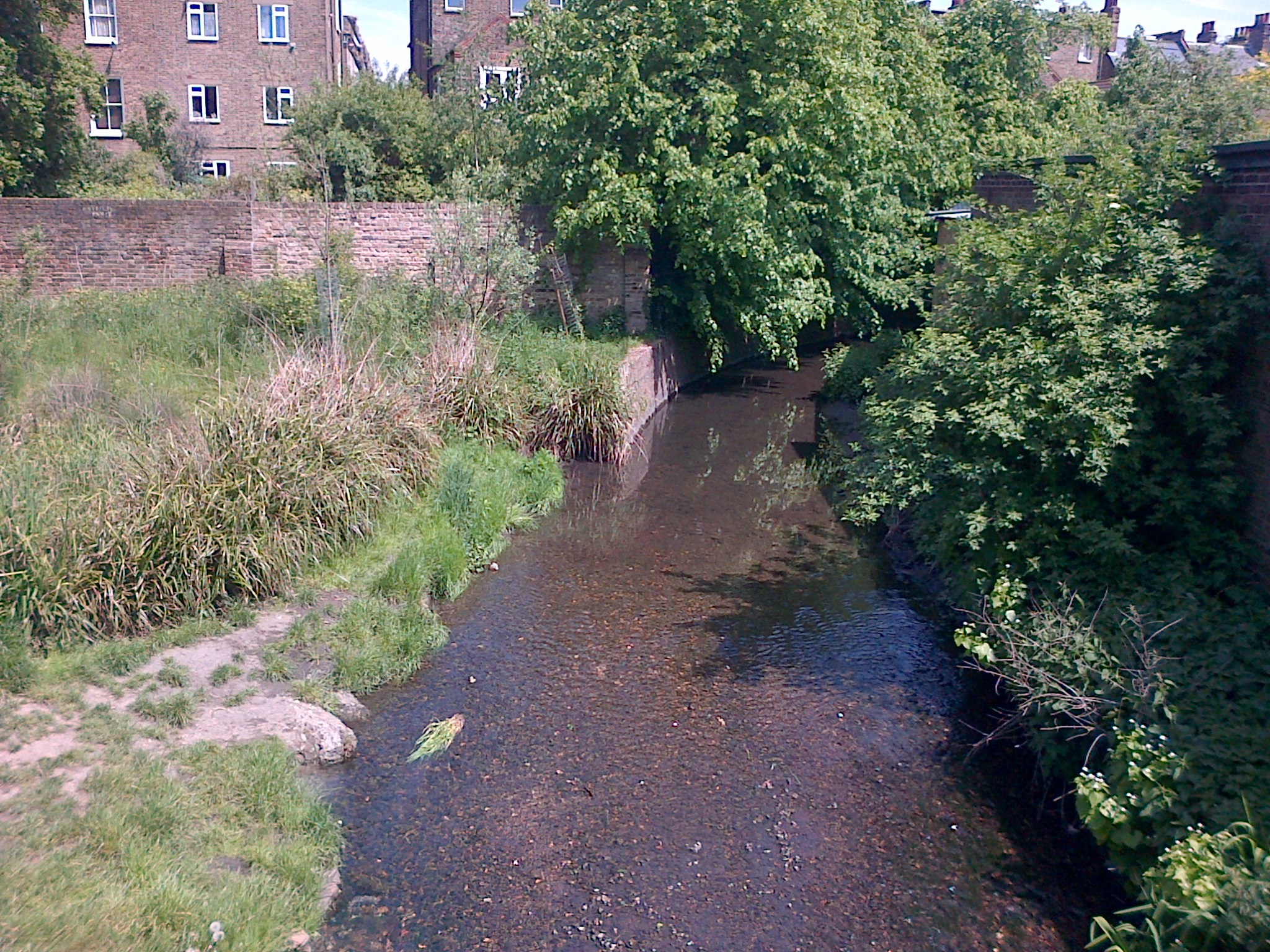 R Quaggy walk2