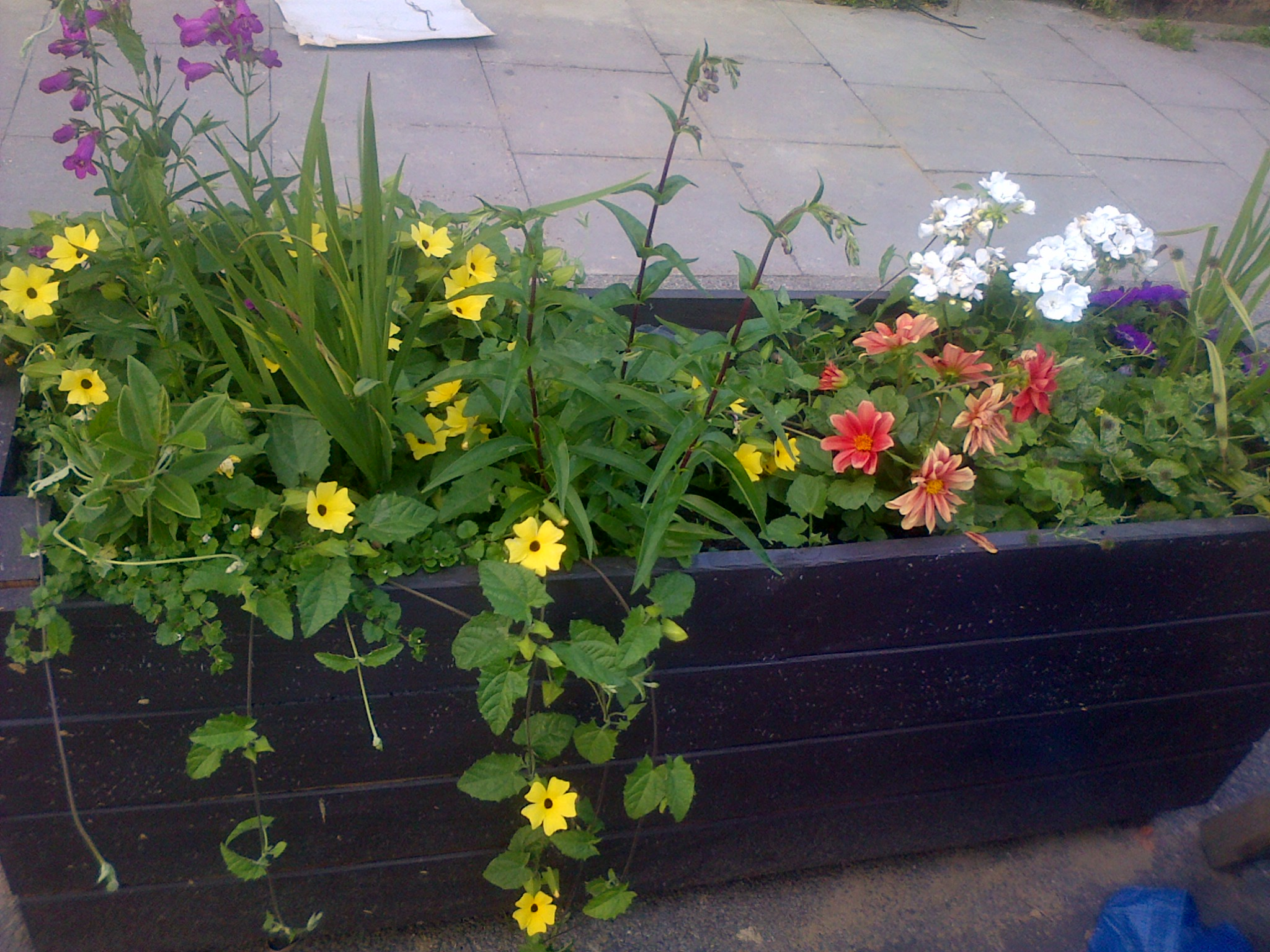 Scout Planters- Springbank Road