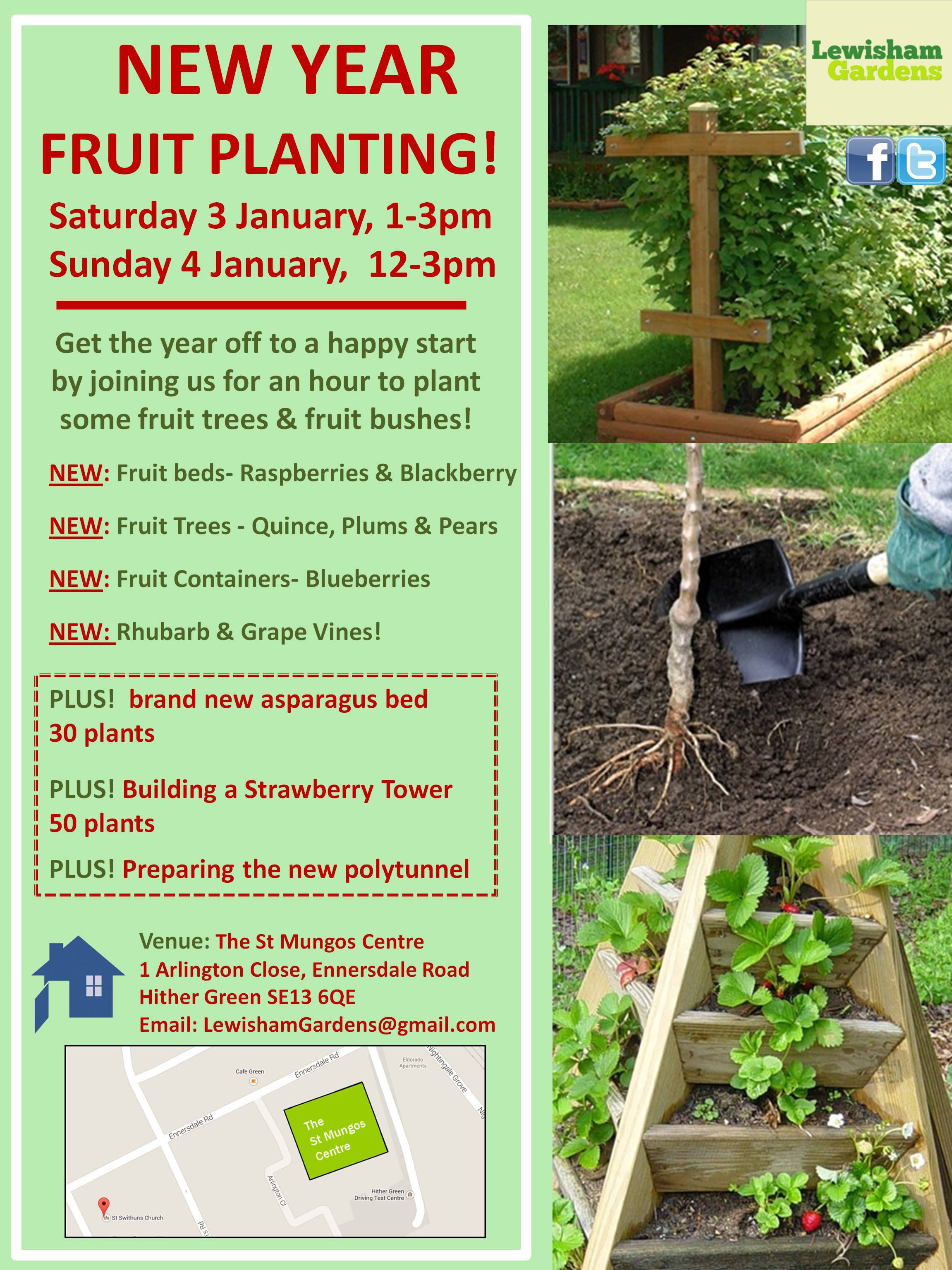 Mungos New year planting