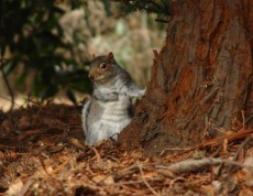 Restful Squirrel