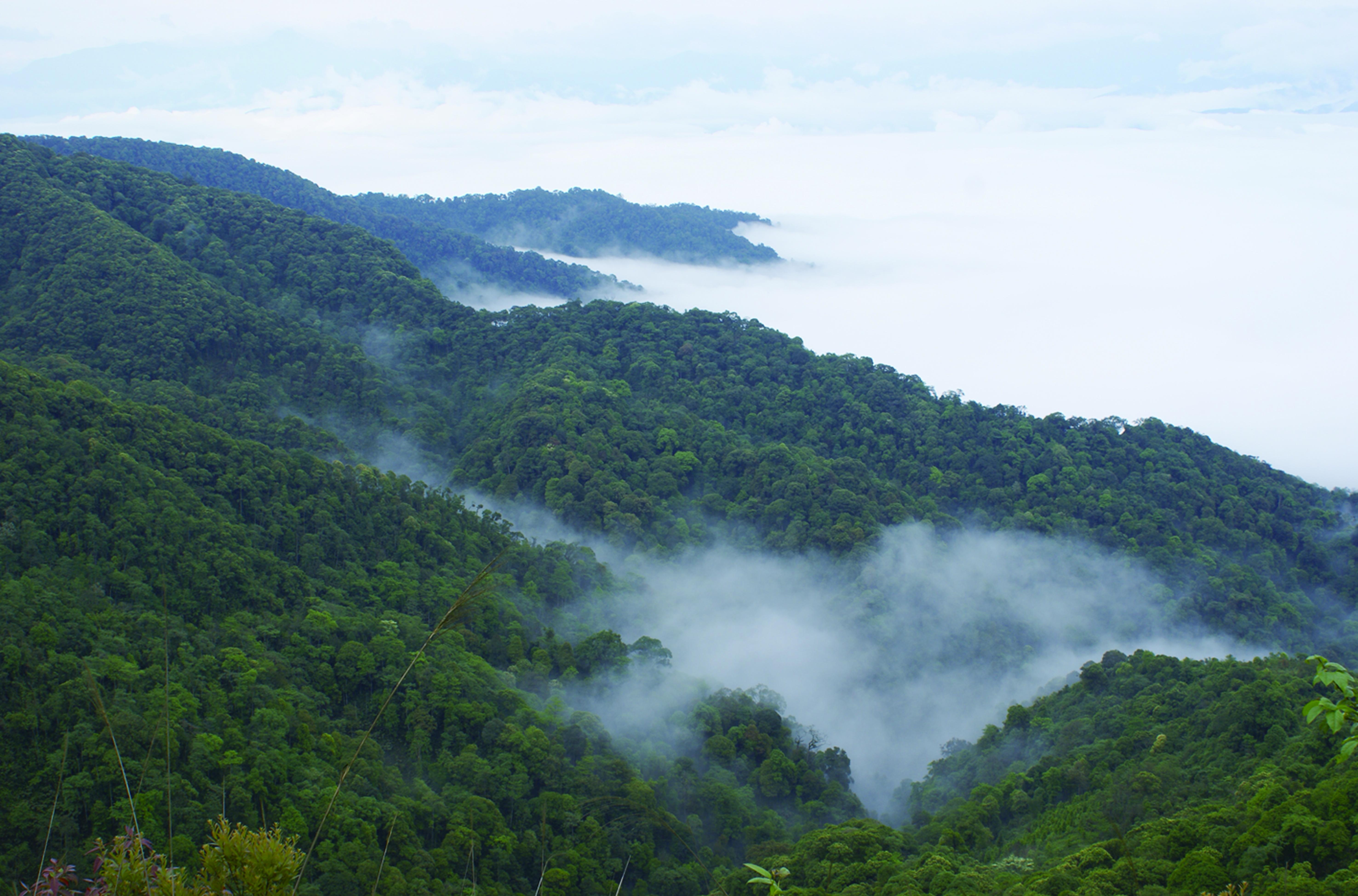View of daweishan cpa