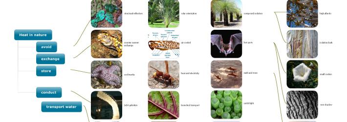 Biomimicry%202