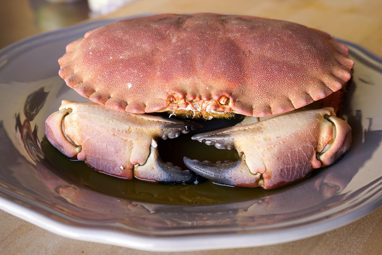 Cuisson pate de crabe 28 images p 226 t 233 de crabe for Chaise longue pronunciation audio