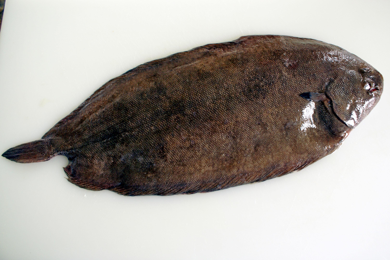 Habiller une sole technique culinaire par chef simon for Cuire une sole avec la peau