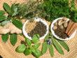 Les herbes et les épices dans les différentes diététiques