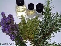 Herbes aromatiques et arômes