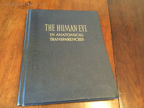 The Human Eye in Anatomical Transparencies