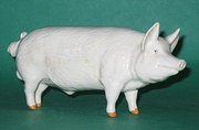 Beswick Large White Boar  Mode