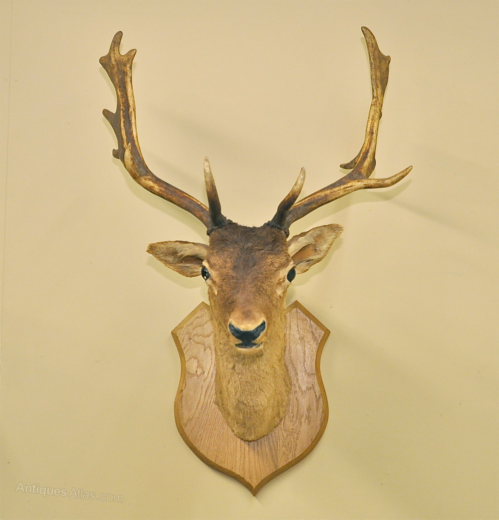 Mounted Deer Head Mounted_stags_head_as186a635z- ...