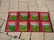 Lovely set of 8 Arts & Crafts tube lined tiles