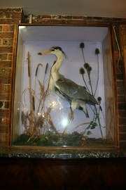 Stuffed Heron