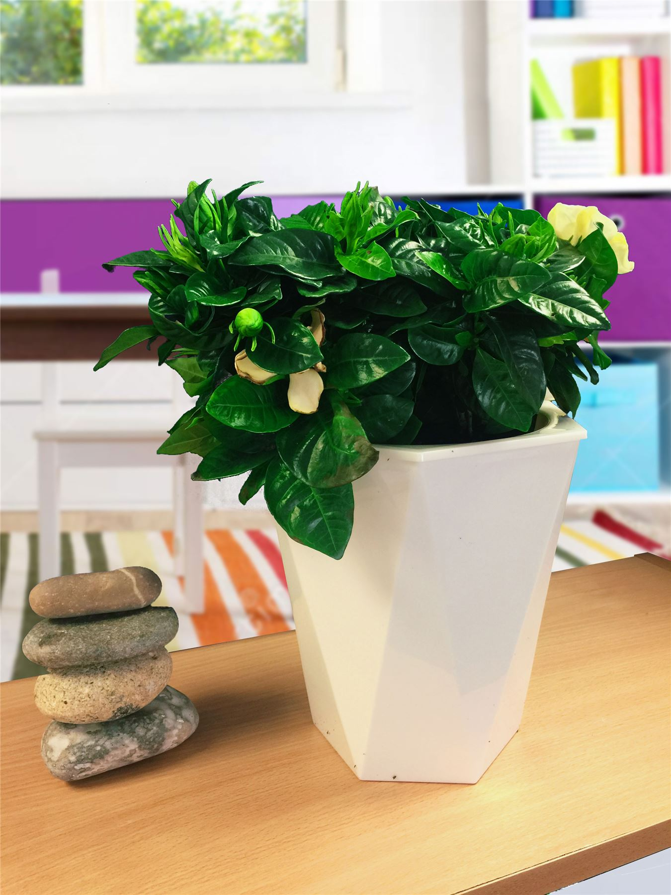 1 tableau plante en blanc brillant Rhombus Auto Watering pot Bureau Patio Maison Jardin