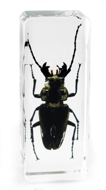 Real Office Insect Paperweight Beetles Bugs Cockroach Specimens Taxidermy