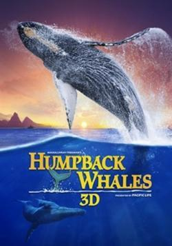 Humpback Whales (2015) - Vision Filme