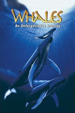 Whales: An Unforgettable Journey (1997) - Cartelera