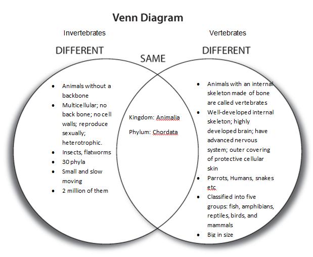 Invertebrates And Vertebrates Chart Images u0026 Pictures - Becuo