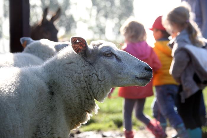 Accueil Champetre Mouton