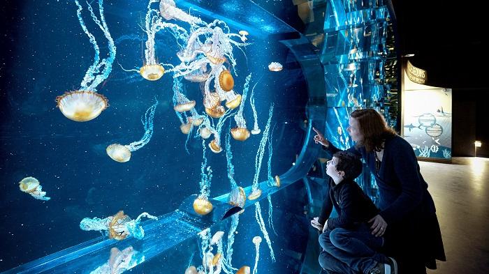 Aquarium meduses