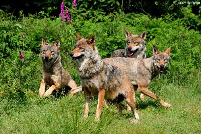 Creuse Parc Loups