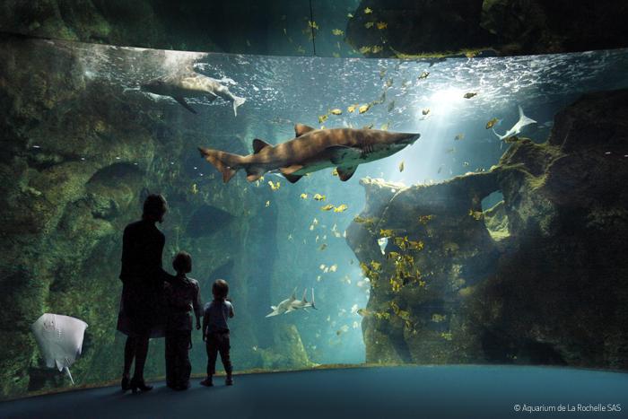 Vacances Poitou famille Aquarium