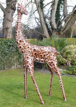 Medium Giraffe 725